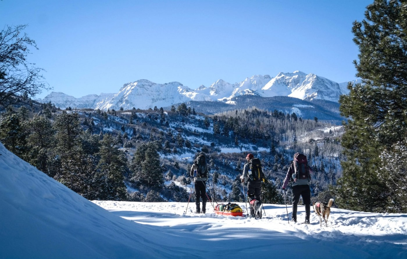 Three people cross country skiing with a dog