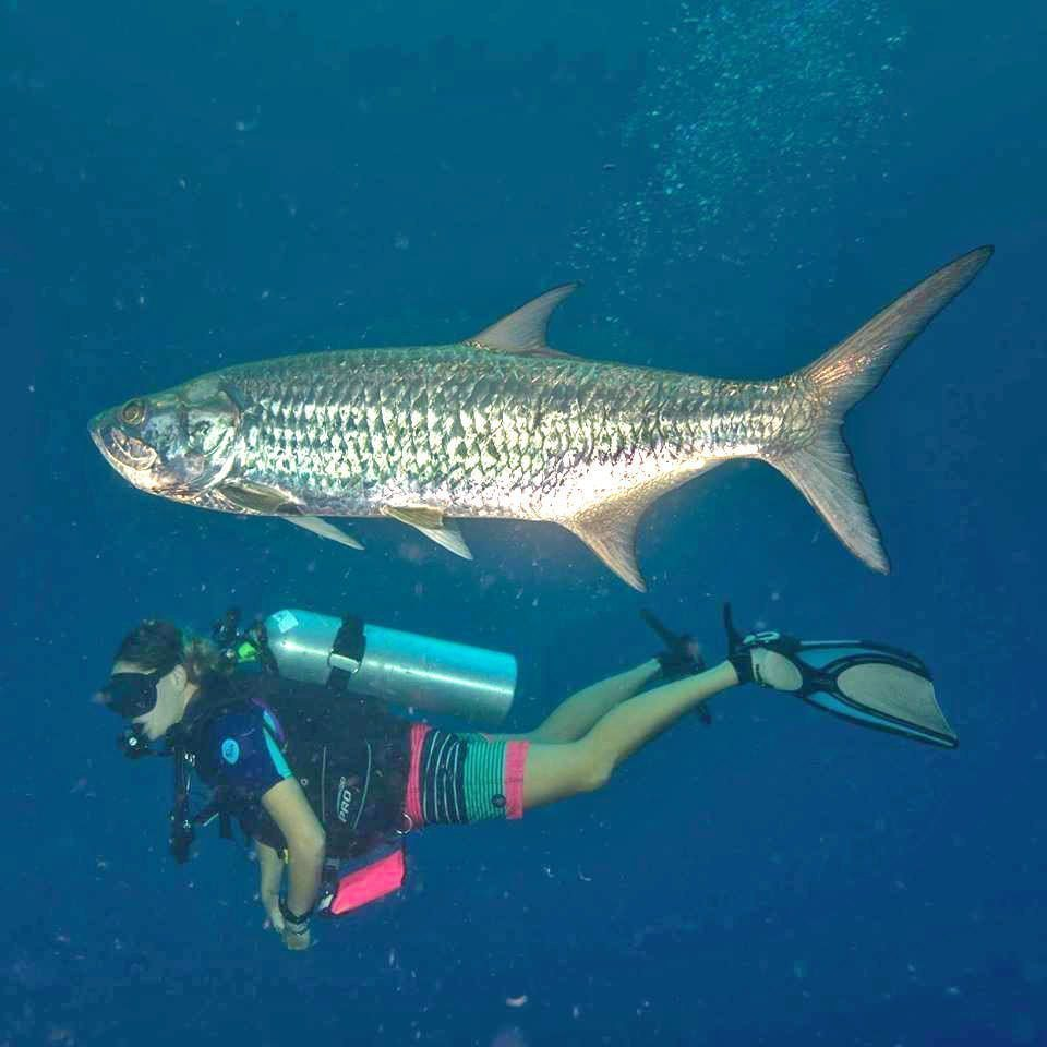 Diving to Preserve Caribbean Ecosystems - Saba Fish