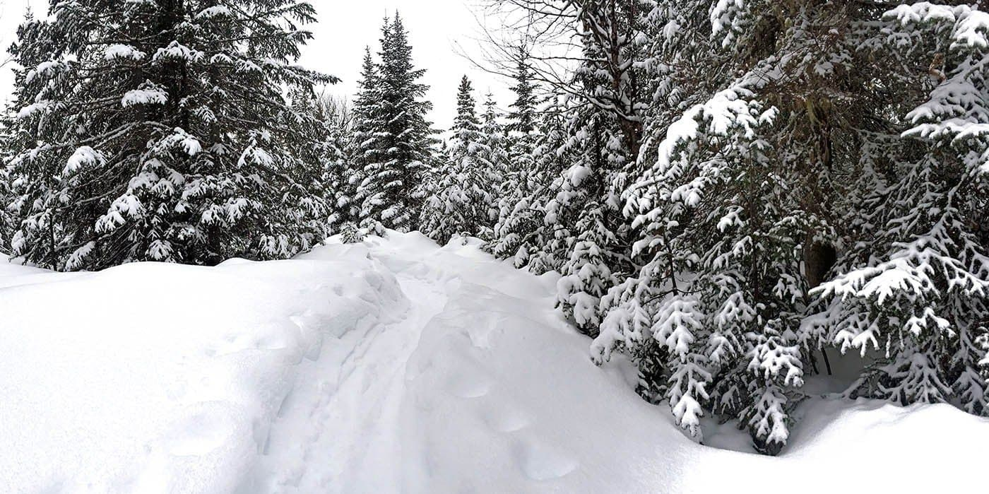 Trail through snow among trees