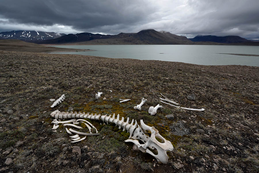 The skeleton of an animal on a shore near water.