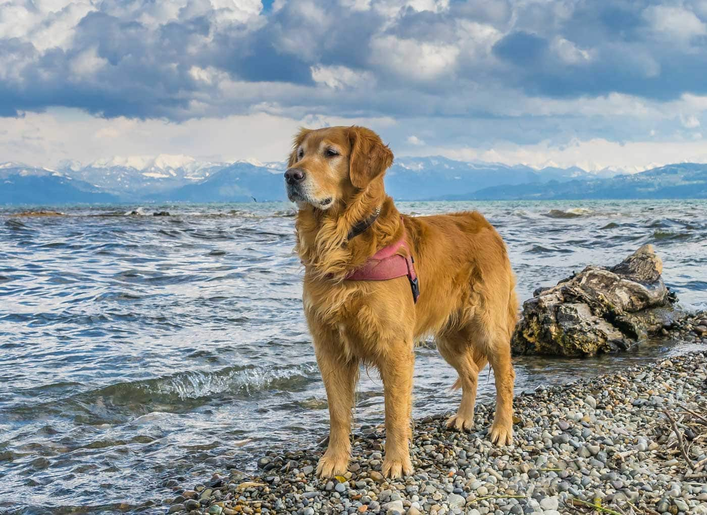 Losing a canine adventure partner - Stoic dog on shoreline