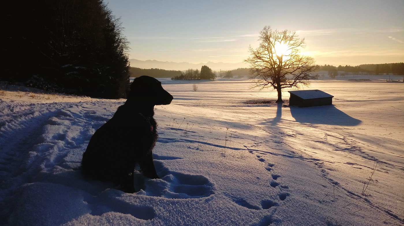 Losing a canine adventure partner - dog in winter landscape