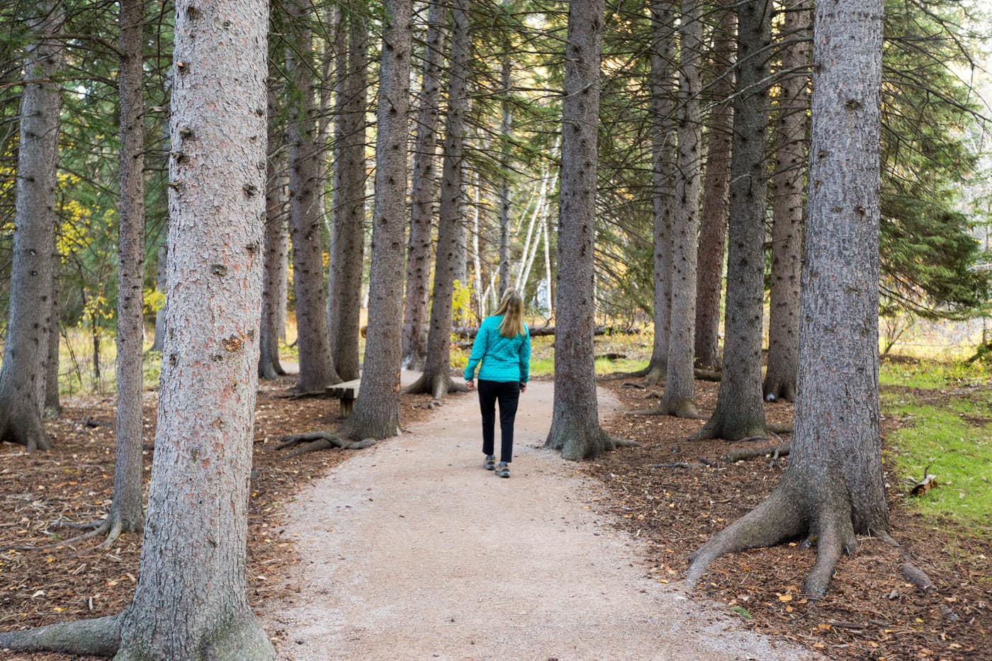 A woman on a trail between trees.