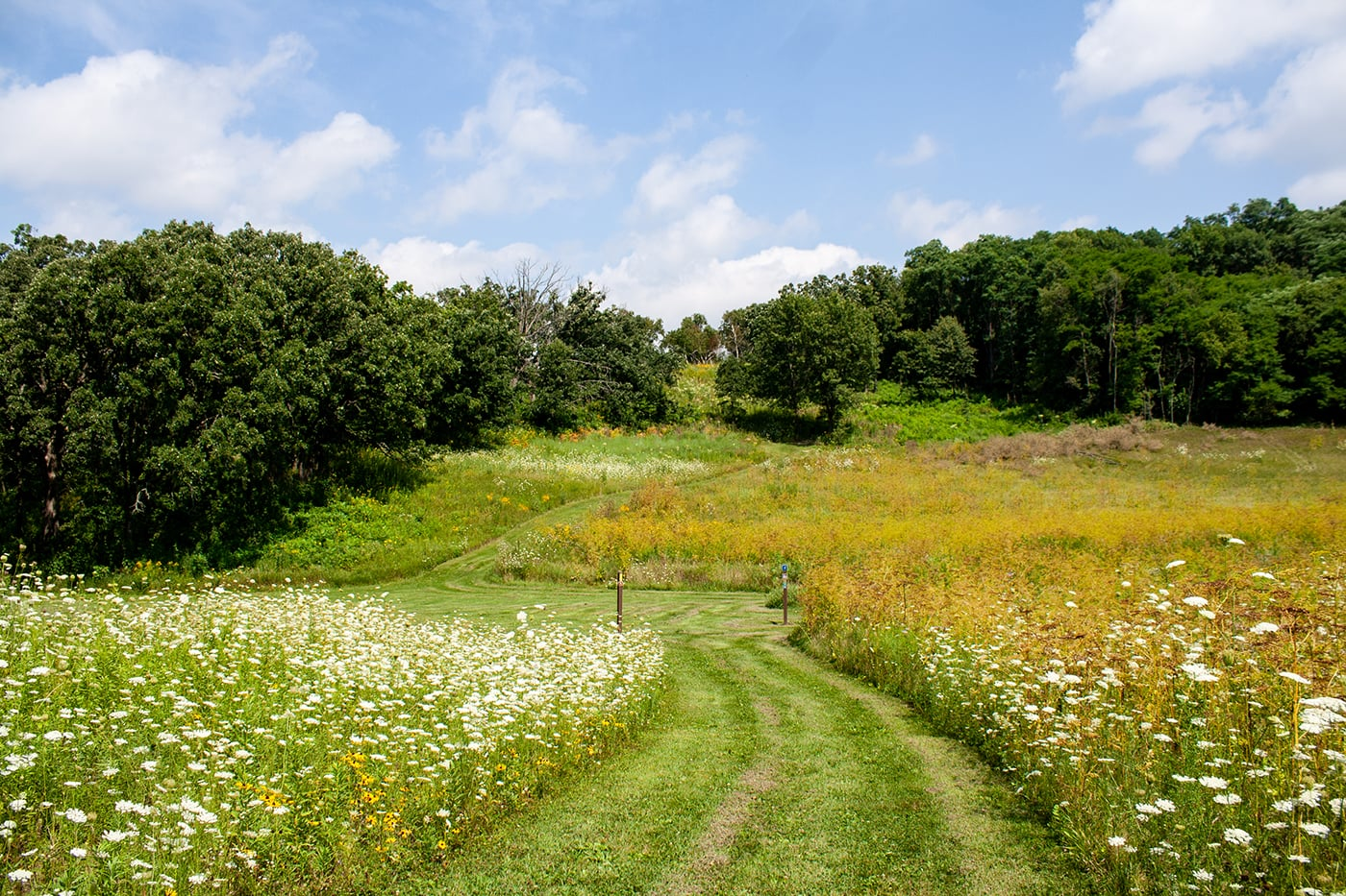 Flat grass trail with meadows on each side and trees in the background.